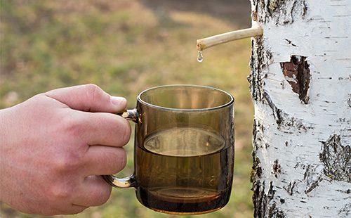 Березовый сок капает в чашку
