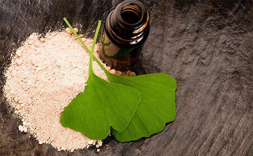 Листья и сухой корень гинко билоба