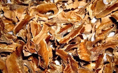 Перегогодки грецкого ореха