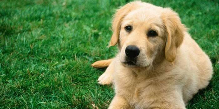 Все, что вам нужно знать об услугах по кремации домашних животных